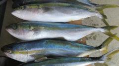 キャッチアンドリリースしない海釣りが大量虐殺にしか見えない件