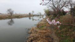 春から始める初心者にオススメの霞ヶ浦水系バス釣りポイント厳選3箇所!